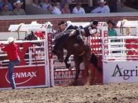 Calgary Stampede Rodeo © JamesTeterenko
