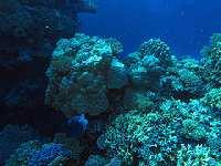 Coral © Derek Keats
