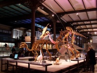 Museum of Natural Sciences of Belgium