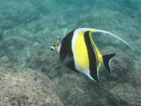 Tropical Fish © djnekokittie