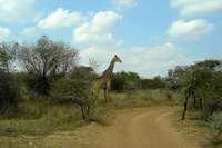 Giraffe © jurgen.proschinger