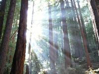 Muir Woods National Park © Richs5812
