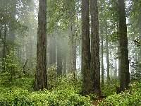 Redwood National Park © Michael Schweppe