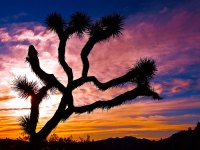 Joshua Tree National Park © Graham