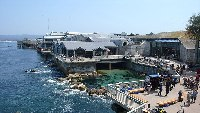Monterey Bay Aquarium © Meij.kobayashi
