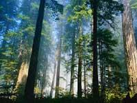 """PhotoCol.net  """" фото лес.  Фото, фотографии, обои, картинки бесплатно.  Фотки коллекция.  Качать и смотреть бесплатно."""