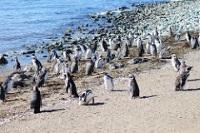 Magdalena Island Penguin Reserve © Rachel Hobday