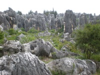 Stone Forest © BrokenSphere