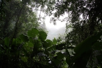 Monteverde Cloud Forest Reserve © Velorian at wts wikivoyage