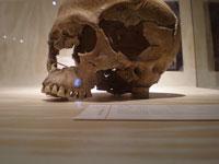 Neanderthal skull © JacobEnos