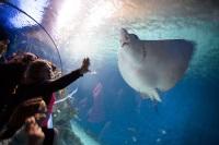 Denmark Aquarium © Johan Wessman