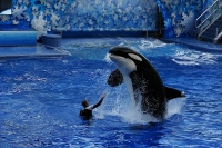 SeaWorld, Orlando © David R. Tribble
