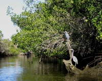Herons on the Estero River © Mwanner