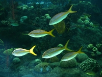 Florida Aquarium © adobemac