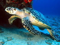 Marine Life Center © Marinelife Center
