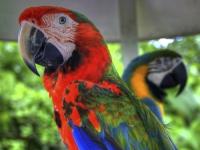 Beautiful birds at Jungle Island © vgm8383