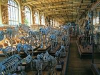 Natural History Museum © Jim Linwood