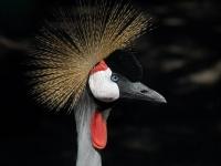 Bird at Phoenix Parc © GIPE25