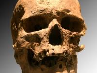 Cro-Magnon Skeleton © 120
