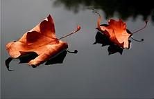 Autumn Festival © frank_hartwig