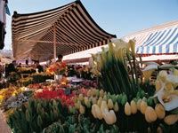 Flower market © Nice Convention and Visitors Bureau/Nice & You