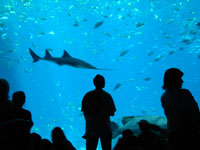 Georgia Aquarium © Angela Grider