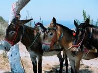 Donkey Trekking © unicellular