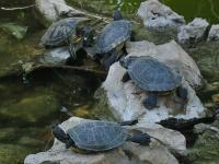 Turtles © Mai Le