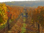 Eger Vineyard © Elin B