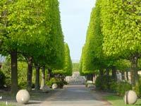 Linden Allee, Botanic Garden © Cbgde08