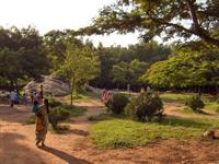 Cubbon Park ©