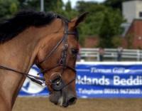 Dublin Horse Show © Rob Hurson
