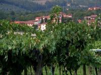 Vineyard in Valpolicella © mykaul