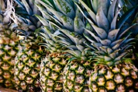 Pineapples © Garry Knight