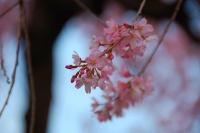 Inokashira Park © kanegen