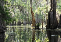 Swamp near Lafayette © Richard Weil