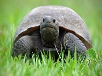 Tortoise © minds-eye