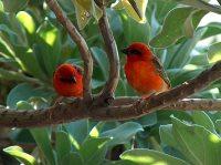 Casela Bird Park © Mohammed Al-Naser