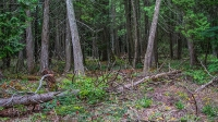 Forest on Mackinac © N8huckins