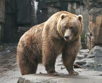 Minnesota Zoo © clairity