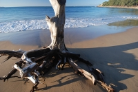 Another beautiful Mozambique beach © imolcho