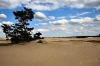 Hoge Veluwe National Park, Netherlands © Stefan Kruithof