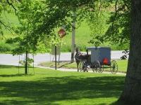 Amish Buggy, Lancaster © David Wilson