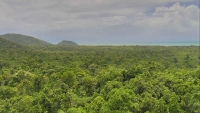Cape Tribulation © Daintree Rainforest Observatory