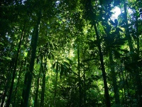 Daintree Rainforest © tauntingpanda