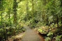 Gondwana Rainforest © Andrea Schaffer