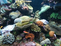 Reef HQ Aquarium, Townsville © loloieg