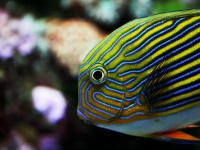 Tropical fish at Reef HQ © jonnyr1