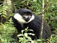 Monkey ©