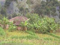 Tea Plantations © Huye